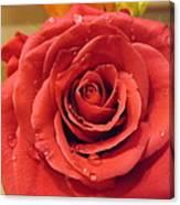 Pink Rose Drops Canvas Print