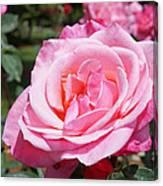 Pink Rose Flower Floral Art Prints Roses Canvas Print