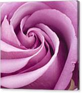 Pink Rose Folded To Perfection Canvas Print