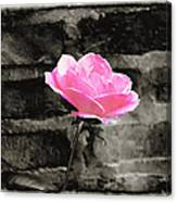 Pink Rose In Black And White Canvas Print