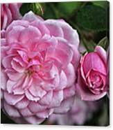 Pink Rose Petals Canvas Print