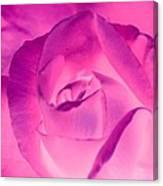 Pink Rose - Photopower 1790 Canvas Print