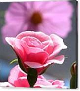 Pink Rose With Cosmo Canvas Print