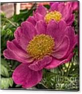 Pink Row Canvas Print