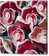 Pink Sea Shells On Cozumel Canvas Print