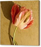 Pink Splendor  Canvas Print