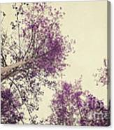 Pink Trees Canvas Print