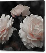 Pink Trio Canvas Print