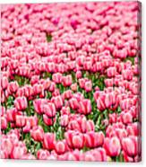 Pink Tulip Carpet  Canvas Print