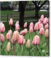 Pink Tulip Patch Canvas Print