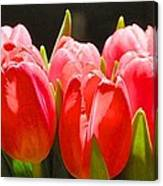 Pink Tulips In A Row Canvas Print
