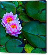 Pink Water Lilies - Lotus Canvas Print