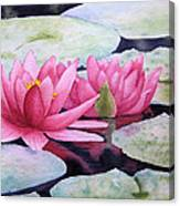 Pink Waterlilies Canvas Print