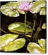 A Waterlily Reflection Canvas Print