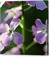 Pink Wildflwer Canvas Print