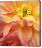 Pink Yellow Centre Canvas Print