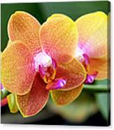 Pink Yellow Orchid Canvas Print