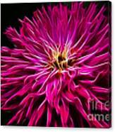 Pink Zinnia Digital Wave Canvas Print