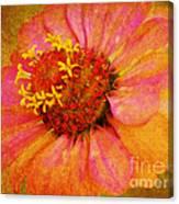 Pink Flower Wall Art Zinnia Floral Fine Art Canvas Print