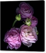 Pinkalicius Ranunculus... Pink For Canvas Print