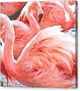 Pinked Flamingos Canvas Print