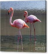 Pinkest Flamingo Canvas Print