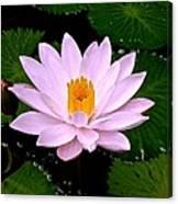Pinkish Lotus Flower Canvas Print