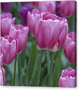 Pinks And Purples Canvas Print