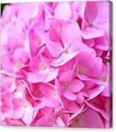 Pinks Canvas Print