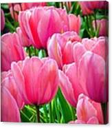 Pinks My Color Canvas Print