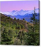 Pinsapar At Sierra Nevada Canvas Print