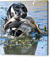 Pintail Retrieve Canvas Print