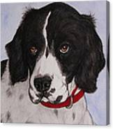 Pippy The Springer Spaniel Canvas Print