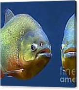 Piranha Ready For Lunch Canvas Print