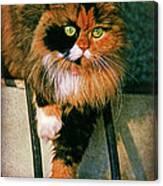 Pirate Kitty Canvas Print