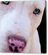 Pit Bull Art - Not A Fighter Canvas Print