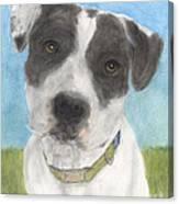 Pitbull Dog Portrait Canine Animal Cathy Peek Canvas Print