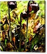 Pitcher Plant Abstraction Canvas Print