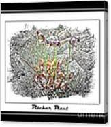 Pitcher Plant Illustration Canvas Print