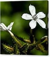 Pixie Flower Canvas Print