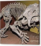 Placerias Fossil Canvas Print