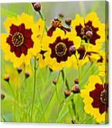 Plains Coreopsis Canvas Print