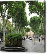 Plane Alley - Aix En Provence Canvas Print