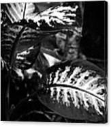 Plant 8658 Canvas Print