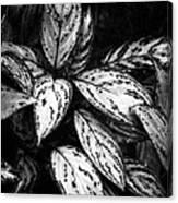 Plant 8659 Canvas Print