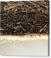 Plant-based Insulating Materials Canvas Print