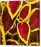 Plant Design Canvas Print