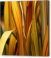 Plant In Yellow And Green Canvas Print