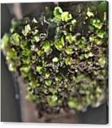 Plant Mutation Canvas Print