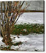 Plantgrasscomp 2009 Canvas Print